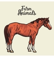 Isolated one brown horse vector image