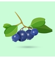 Blueberry with green leaf isolated on white vector image