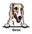 borzoi - color peeking dogs - breed face head vector image vector image
