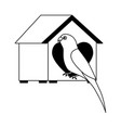 parrot with wooden house pet vector image vector image