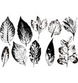 branches and leaveshand drawn floral vector image vector image