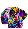 colorful dalmatian isolated on white background vector image