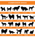 companion dogs silhouettes vector image vector image