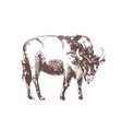 european bison hand drawn with contour lines on vector image vector image