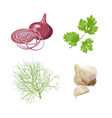 onion garlic parsley dill fresh vegetables vector image vector image