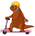 otter playing kick scooter vector image