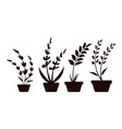 plant pot icon design template isolated vector image