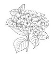 blooming flower hydrangea vector image vector image