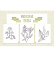 Icon set - medical herbs and berries Chamomile vector image