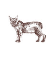 lynx or bobcat hand drawn with contour lines on vector image