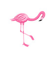 pink flamingo standing on one leg - colorful vector image vector image