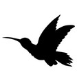 tropical bird hummingbird vector image