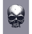 Black and white human skull vector image vector image