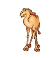 camel in cartoon style vector image vector image