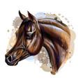 portrait an arab horse graphic color realistic vector image vector image