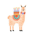 childish cute lama standing with celebratory vector image vector image