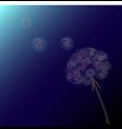 dandelion grass flower in the dark night time vector image vector image