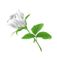 rosebud white rose twig with leaves vector image vector image
