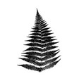 fern leaf silhouette vector image vector image