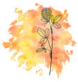flower of clover at watercolor background vector image vector image