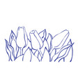romantic tulip composition vector image