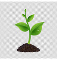 green sprout with transparent background vector image vector image