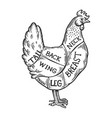 meat diagram chicken engraving vector image