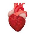 anatomical heart isolated heart diagnostic center