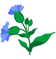 flower blue vector image vector image