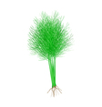 Fresh Green Dill on A White Background vector image vector image