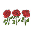rose flower sketch engraving vector image vector image