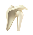 Shoulder joint isolated on white vector image vector image