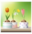 hello spring flower with crocus tulip snowdrop vector image