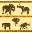 African elephants set vector image vector image