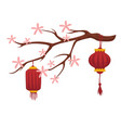 blooming sakura and chinese paper lanterns vector image