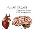 human biology organs anatomy vector image