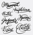 mammal and amphibian hand written typography vector image vector image