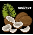 Coconut Isolated vector image vector image