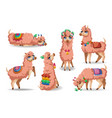 cute llama character in different poses vector image