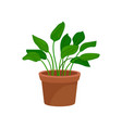 leafy home decorative plant houseplant for vector image