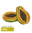 papaya exotic fruits hand drawn vector image vector image
