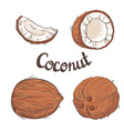 Coconut set - the whole nut a coco segment and