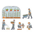 farmers growing ecologically clean food vector image