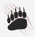 bear footprint with claw scratches vector image vector image