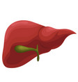 human liver realistic isolated on vector image