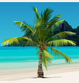 palm growing on tropical coast with the blue water vector image vector image