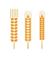 Set of wheat ears or rice vector image vector image