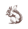 tree squirrel hand drawn with contour lines on vector image vector image