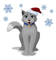 gray domestic cat in a new year s cap on a vector image