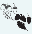 Acorns with leaf vector image vector image